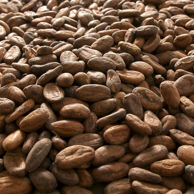 Cacao nouvelle guinée papouasie - Le petit carré de chocolat