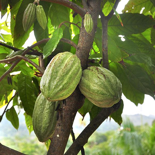 Gamme Chocolat 75% Origine Tanzanie - Le Petit Carré de Chocolat
